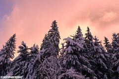 Le ciel s'embrase ! (Elouan Astrowild) Tags: neige sapins hiver ciel rouge coucherdesoleil rose arbres fontdurle vercors france europe montagne alpes prèsalpes altitude nuages