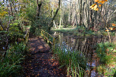 Local Sussex Woodland.. (Adam Swaine) Tags: woodland woodlandfloor trees britain bridges nature naturelovers england english rural beautiful tree water sussex westsussex british adamswaine 2019 autumn autumncolours autumnviews leaves uk ukcounties paths footpath counties countryside county