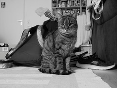 7e3_b181669-tuna (Wolfgang Lonien) Tags: animal cat tuna bw schwarzweiss