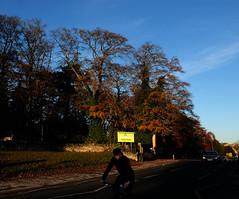 York YHA (Allan Rostron) Tags: york trees yha autumn beech