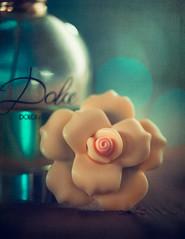 Dolce (Ro Cafe) Tags: lids mm macromondays nikkor105mmf28 sonya7iii macro perfume bottle cap bokeh textured