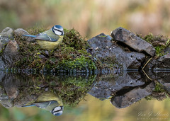 Reflection (ian._harris) Tags: nikon d750 tamron150600mmg2 england zoom telephoto november 2019 autumn britain great gb uk united kingdom outside outdoor day camera photo photography photograph photographer picture capture image snap shot flickr visit visitor wildlife wild nature natur naturephotography tamron g2 150600 wilde animals life naturaleza reflection