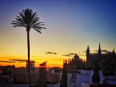 Mixed hour (Мaistora) Tags: sky skyline skyscape silhouette colour colourful blue orange yellow purple black tree palm building spires church cathedral contrejour backlight sunset gold golden goldenhour bluehour phone samsung galaxy s10 android long lens zoom tele snapseed