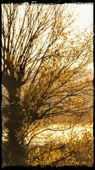 Mist and lost memories (color raimbow) Tags: mistymorning mist autumn goldenleaves tree dream reality landscape italy