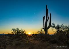 Sunrise on the trail (doveoggi) Tags: arizona scottsdale mcdowellsonoranpreserve desert sunrise saguaro 3201