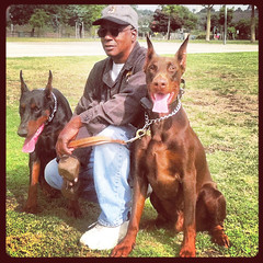 europeandobermanstud alonzo-10