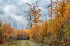 09112019-DSC_0054 (vidjanma) Tags: petitestailles arbres automne chemin nuages sapins