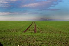 Perspective agricole (JDAMI) Tags: céréales semis champ agriculture agricole domartsurlaluce somme 80 picardie hautsdefrance france ciel nuages nikon d600 tamron 2470 perspective sillons lignes