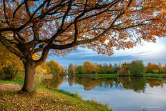 Une journée de novembre (Pascale_seg) Tags: paysage landscape nature natura reflets riflessi reflections automne autumn autunno moselle lorraine france grandest étang arbre tree orange