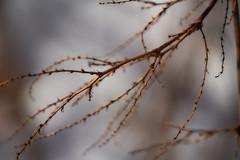 LacLeamy07 (VinSangFou) Tags: a7r3 winter gatineau lacleamy nature outaouais outdoor macro