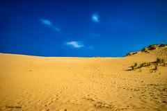 La dune du Pilat (didier95) Tags: dunedupilat sable bassindarcachon jaune bleu paysage gironde ciel