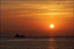 Bringing The Night's Catch Home   Blanes, Catalonia (Flemming J. Gade) Tags: sunrise fishingboat seagulls mediterranean sea sky orange blanes catalonia