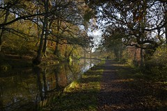 Towpath (Tony Tooth) Tags: nikon d7100 sigma 1020mm canal towpath dogwalker figure caldoncanal autumn november leek staffs staffordshire countryside