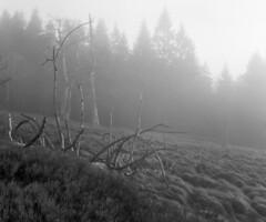 Tree skeleton (str.ainer) Tags: linhof kardansupercolor ilford fp4 adox fx39 nationalpark nationalparkbayerischerwald bavarianforest schneiderkreuznach symmars symmars150mm56