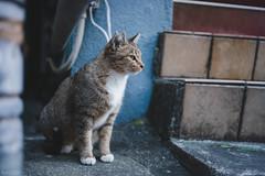 猫 (fumi*23) Tags: ilce7rm3 sony sel35f18f emount 35mm fe35mmf18 a7r3 feline animal alley street cat chat gato neko ねこ 猫 ソニー