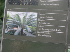 Plant Information  TR - 242 Elegant Cyea (d.kevan) Tags: plants arganzuelahothouse madrid zonatropical1 description photos origin species commonname family elegantctea