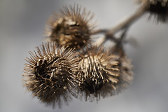LacLeamy09b (VinSangFou) Tags: a7r3 winter gatineau lacleamy nature outaouais outdoor macro
