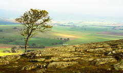 A View from Mount Bolton (Graeme O'Rourke) Tags: lrcfc7456v2 mist rain sheep farms farmland trees rocks grass green yellow sunlight outside nature natural landscape victoria australia mountbolton