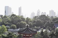Old vs. New (rnqkqgbj60) Tags: old new xian wild goose pagoda skyscrapper budhist nikon d3500 50mm