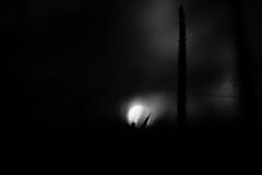 (dreinabeth) Tags: blackandwhite photography nature naturephoto lorenadreiling