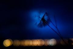 (dreinabeth) Tags: naturaleza naturephoto nature photography lorenadreiling