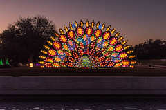Big Peacock at Twilight Hour (SCSQ4) Tags: 2019 arcadia art bigpeacock bluehour california chineselanternfestival chineselanterns favorite favoritepicture lantern lanternfestival lanterns lightshow losangelesarboretum moonlightforest moonlightforest2019 moonlightforestla night nightphotography peacock pool reflections twilight