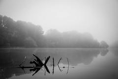 Above the Surface (Joe_R) Tags: water reflection landscape fog bw lakeelkhorn columbia nature maryland unitedstates