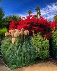 Feelin' Floral (Pennan_Brae) Tags: nature beautiful socal california palmtrees palmtree bluesky colour flower plants garden blooming flowers