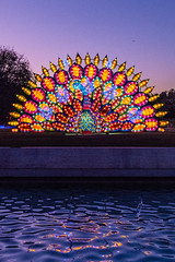 Big Peacock at Twilight Hour (SCSQ4) Tags: 2019 arcadia art bigpeacock california chineselanternfestival chineselanterns favorite favoritepicture lantern lanternfestival lanterns lightshow losangelesarboretum moonlightforest moonlightforest2019 moonlightforestla night nightphotography pool reflections
