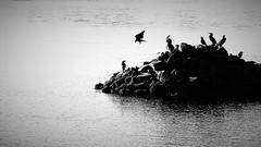 islet (Sat Sue) Tags: olympus micro four thirds m43 penf japan fukuoka bird sea