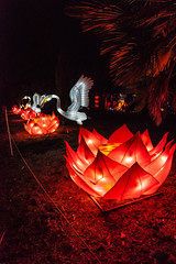 Egrets and Lotuses (SCSQ4) Tags: 2019 arcadia art birds california chineselanternfestival chineselanterns egret egrets favorite favoritepicture flower lantern lanternfestival lanterns lightshow losangelesarboretum lotus lotusflower lotusflowers moonlightforest moonlightforest2019 moonlightforestla night nightphotography