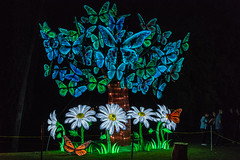 Butterfly Tree (SCSQ4) Tags: 2019 arcadia art butterflies butterflytree california chineselanternfestival chineselanterns favorite favoritepicture lantern lanternfestival lanterns lightshow losangelesarboretum moonlightforest moonlightforest2019 moonlightforestla night nightphotography tree