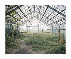 Cologne, 2018 (Darius Urbanek) Tags: 120 65mm 6x7 kodak mamiya7 portra400 abandoned analog color decay film glasshouse mediumformat cologne köln