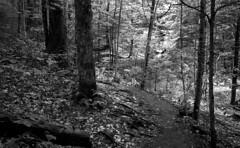 Castle Rock Trail (bingley0522) Tags: leicaiiic voigtlandercolorskopar50mmf25 fp4 ilfordfp4 diafine adirondacks castlerock bluemountainlake easternhardwoodforest path autaut