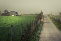 Eifel Meadows (Netsrak) Tags: baum bäume eu eifel europa europe forst landschaft natur nebel fog landscape mist nature