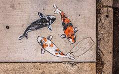 Three Fishes (Wes Iversen) Tags: chicago htt illinois lakeview nikkor18300mm texturaltuesday wrigleyville concrete cracks fish leaves pebbles rocks sidewalkart sidewalks sticks streetart texture weathered