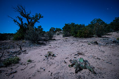 Prickly Pear (theskyhawker) Tags: outdoors no people landscape sky scenics rural scene clear cactus desert night full moon juniper sand dust gallup new mexico usa four corners