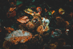 Seeds of Autumn (RTA Photography) Tags: beechnuts autumn nature leaves outdoors nikon d750 rtaphotography colours tamron 28 2470