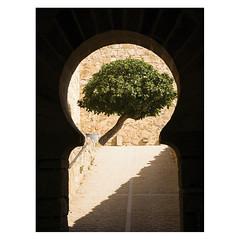 Tree, Castillo de Trujillo, Extremadura (Daniel Philipona) Tags: castillo de trujillo extremadura