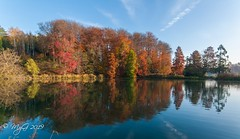 Natural symetry (Mike Y. Gyver ( Back after an healthy break )) Tags: paysage panorama peace pond arbre automne autumn colors contrast clouds ciel zen europe emotion tree travel trees yellow imagination outdoor orange lahulpe quiet quietude sky serenity d90 green hike sigma1020mmf35exdchsm nikon nature parc landscape mygphotographiewixsitecommyg2017 myg 2019 natural water reflect reflection vert rouge red belgium belgique brussels bruxelles blue bleu scenic idyllic lake tmt