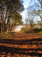 Autumn days (Ian Robin Jackson) Tags: autumn trees landscape shadows aberdeenshire scotland fall herbst view rural path countryside outside autumnal november days wood fields light