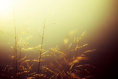 Sunrise (tonguedevil) Tags: outdoor outside countryside autumn nature lake grass light colour sunlight shadows sunrise