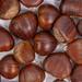 Flat lay above Fresh raw Chestnuts