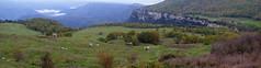 PAISATGE (Joan Biarnés) Tags: camìdelfar laselva girona catalunya paisatge paisaje vaca baca 350 panasonicfz1000