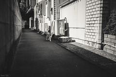 猫 (fumi*23) Tags: sony ilce7rm3 35mm emount fe35mmf18 sel35f18f a7r3 animal alley bw monochrome blackandwhite ねこ 猫 ソニー cat gato neko