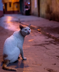 (sharmi_diya06) Tags: street streetphotography streetphot animal cat light colors letsexplore outside natgeophotographer natgeophotographers natgeoyourshot yourshotnatgeo