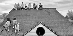 Rooftop Mountain (jeremy.gilmore.art) Tags: goats roof rooftop sitting group people shingles asphalt black white old house resting women child dog leashes escape strange odd wtf blackandwhite