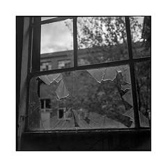 break • turckheim, alsace • 2018 (lem's) Tags: broken window glass factory usine urbex fenetre cassée verre bris abandon turckheim alsace rolleiflex t