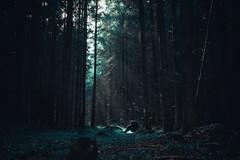 Enzo. (Alfred Bold Photography) Tags: surreal wood wald nature selfie portrait selfportrait manuel sony dark moody bedrückend stimmung human alone creep horror afraid