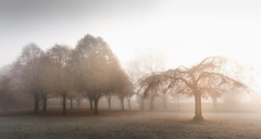 Misty Mornings (peter_beagan) Tags: mist tree red autumn frost frosty morning isolated solitary cold crisp park fog misty foggy